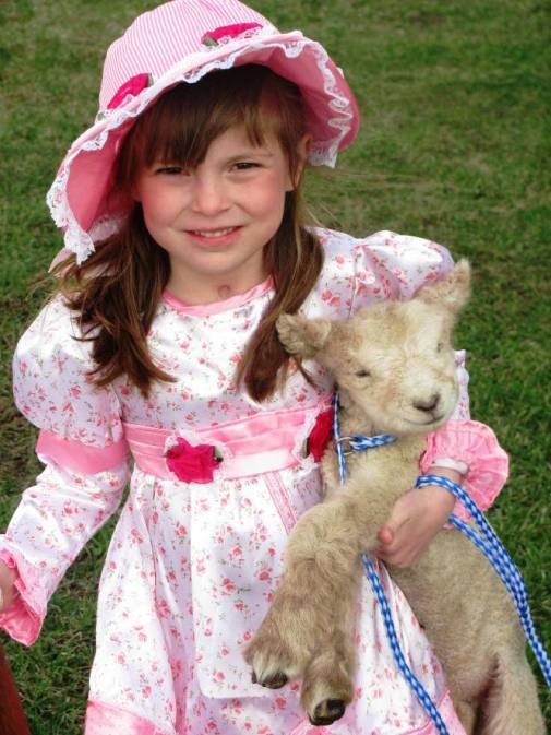 Babydoll Southsdown Sheep for Sale